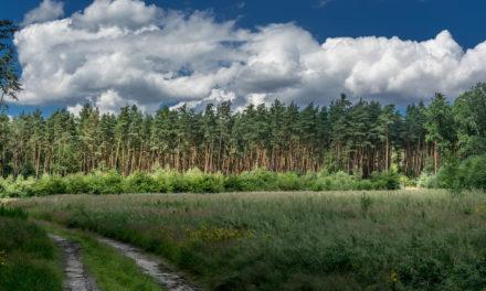 Leśne szlaki rowerowe