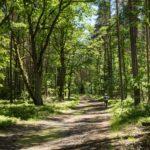 Leśne ostępy