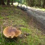 Bory Dolnośląskie czyli rowerem lasami