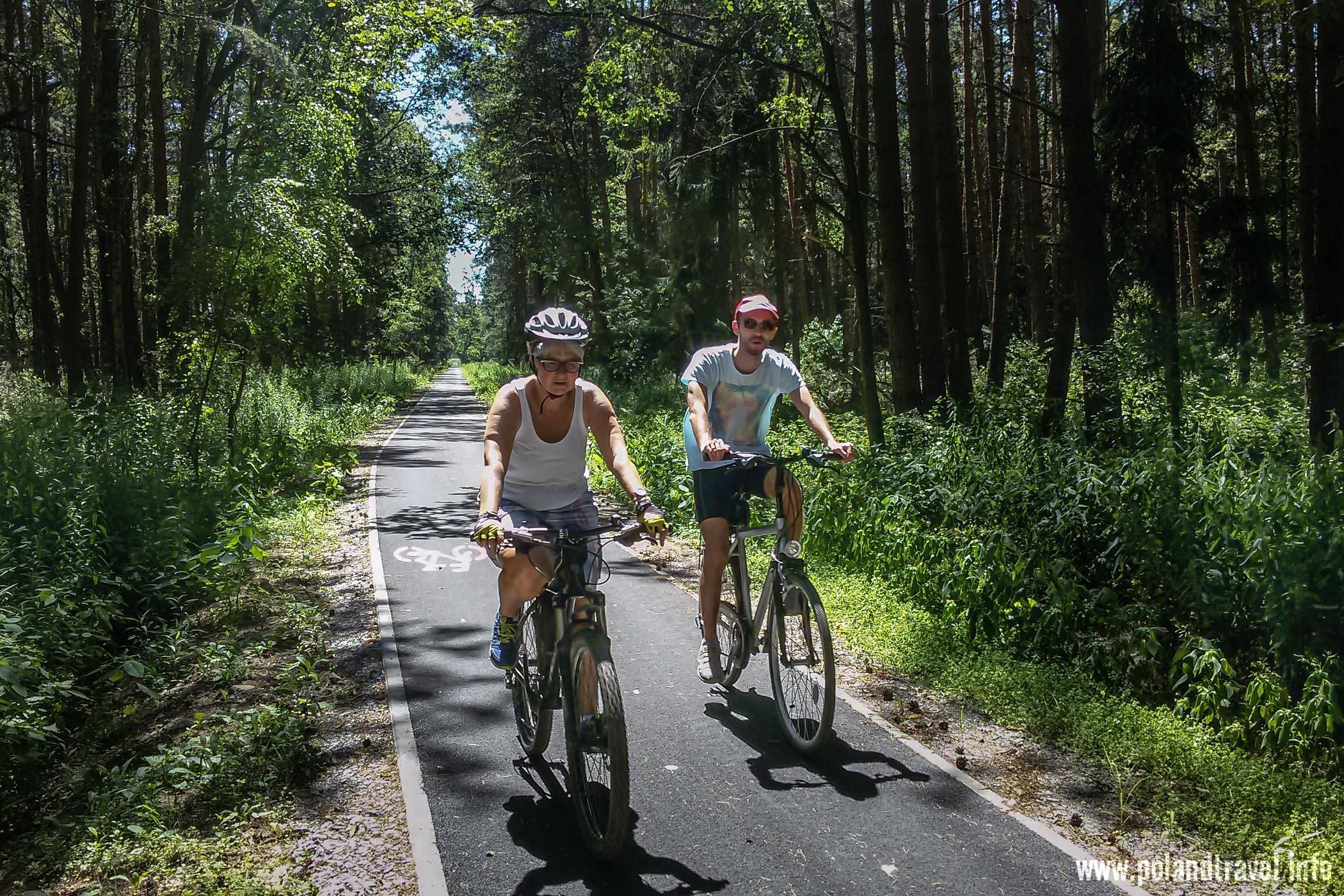 wysoki las z asfaltową ścieżką rowerową i dwoje rowerzystów