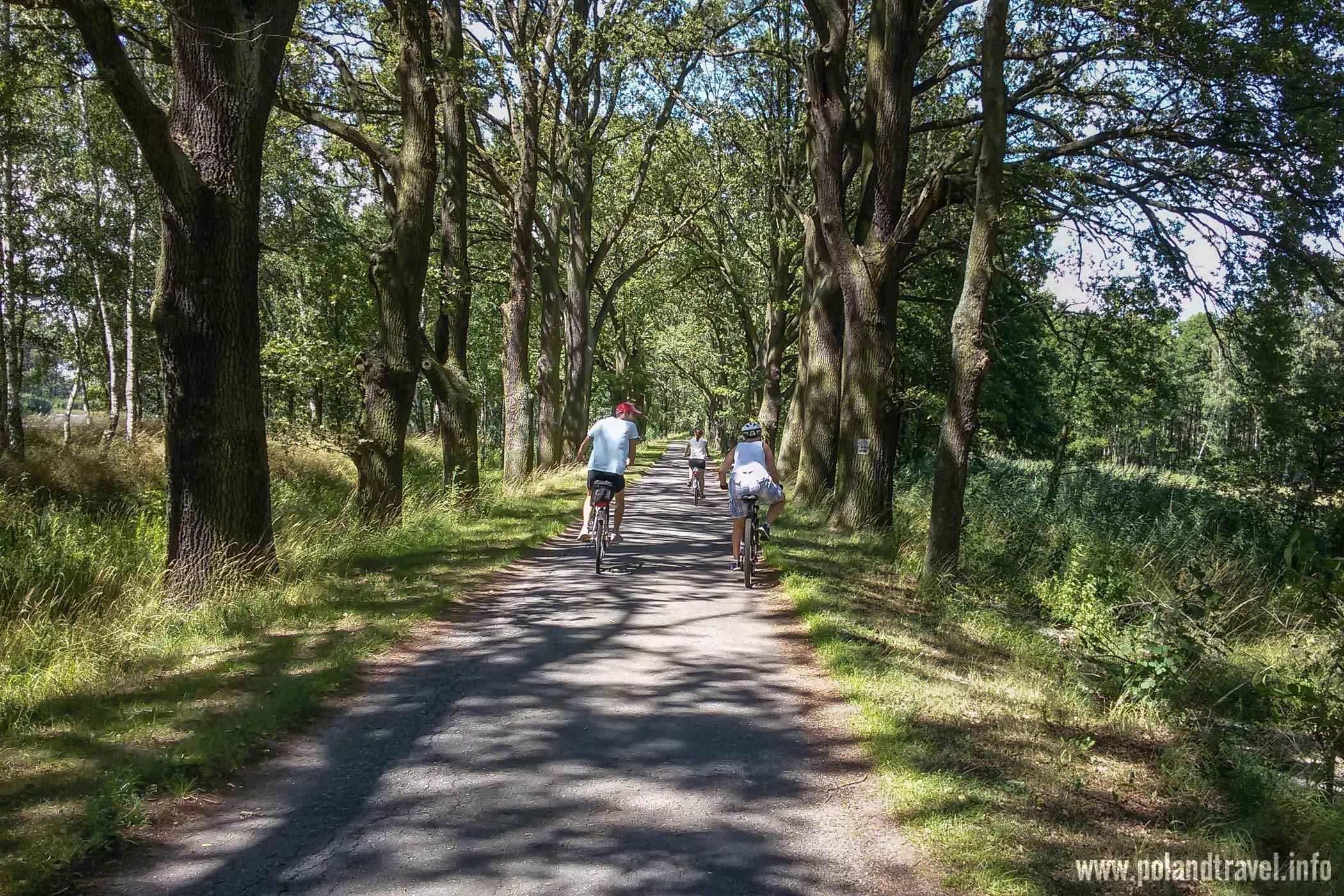 Ruda Sułowska, Asfaltowa Aleja wśród dużych drzew i trójka jadących rowerzystów