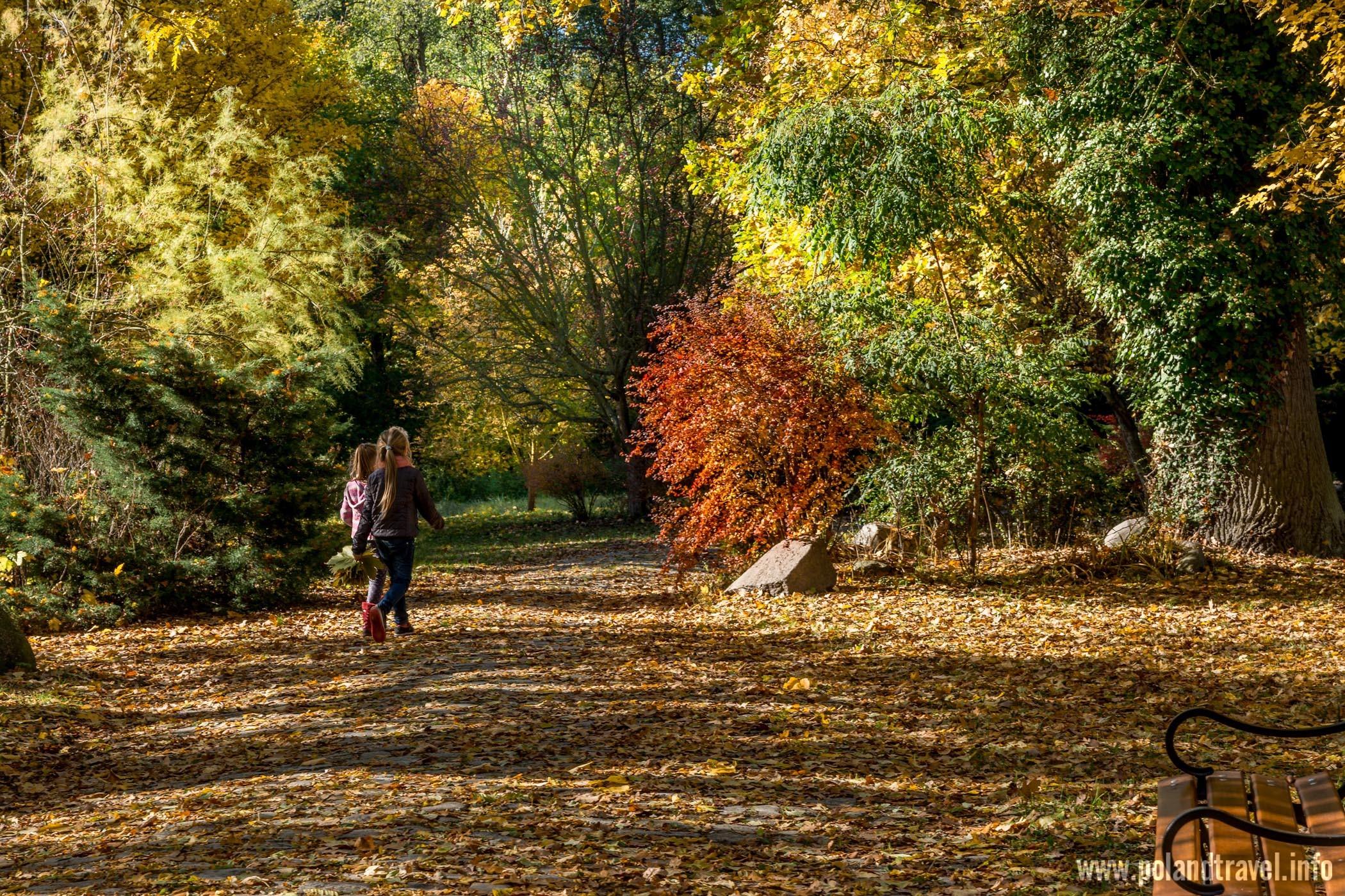 Zamek Wojnowice, podłoże usiane opadłymi liśćmi, kolorowe drzewa i krzewy dwie idące dziewczynki