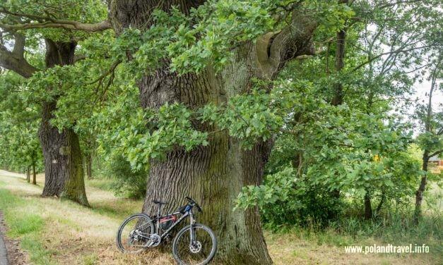 Stobrawski Park Krajobrazowy na rowerze cz3 B
